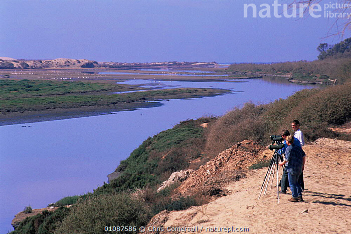 Tourists birdwatching Greater flamingoes out on lagoon, Oued Souss, Morocco, North Africa  ,  AFRICA,BIRDWATCHING,ECOTOURISM,FLAMINGOES,LAGOON,LANDSCAPES,LEISURE,NORTH AFRICA,PEOPLE,RIVERS,TOURISM,WADING BIRDS,WATER,WETLANDS,WILDLIFE WATCHING,NORTH-AFRICA , flamingos  ,  Chris Gomersall