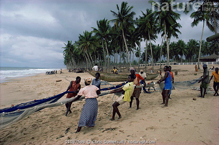 Villagers hauling in traditional fishing nets on beach, Ghana, West Africa  ,  AFRICA,BEACHES,COASTAL WATERS,COASTS,FISHERIES,FISHING,FOOD,HUNTING FOOD,MARINE,NETS,PEOPLE,SEA,TRADITIONAL,WEST AFRICA,WEST-AFRICA  ,  Chris Gomersall
