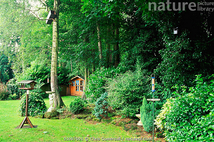 Bird friendly garden with mature trees and shrubs, nestboxes and feeders. UK  ,  BIRD,BIRDS,BRITISH,CGO,CONSERVATION,EUROPE,FEEDERS,FRIENDLY,GARDEN,GARDENS,LANDSCAPES,MATURE,NESTBOXES,PLANTS,SHED,SHRUBS,TREES,UK,UNITED KINGDOM,WILDLIFE,ENGLAND  ,  Chris Gomersall
