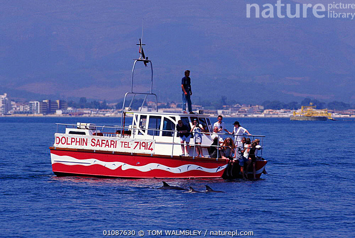 Tourists watch Common dolphins {Delphinus delphis} Gibralter  ,  BOATS,CETACEANS,COASTAL WATERS,GIBRALTER,HORIZONTAL,MAMMALS,MARINE,MEDITERRANEAN,PEOPLE,TOURISM,TOURISTS,TW,WATCHING,WHALEWATCHING,DOLPHINS, Mammals  ,  TOM WALMSLEY