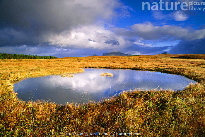Water pool and blanket bog, Altnaharra, Sutherland, Scotland, UK  ,  ALTNAHARRA,BLANKET,BOG,BOGS,BRITISH,EUROPE,FLOW COUNTRY,HORIZONTAL,LANDSCAPES,NB,POOL,SUTHERLAND,UK,UNITED KINGDOM,WATER,WETLANDS,SCOTLAND, United Kingdom, United Kingdom, United Kingdom,Catalogue1  ,  Niall Benvie