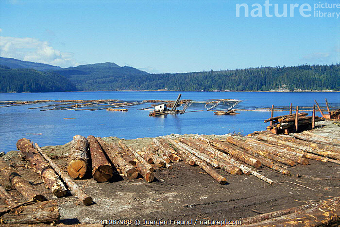 Wood processing industry on Vancouver Island, British Columbia, Canada  ,  CANADA,COASTAL WATERS,COASTS,DEFORESTATION,DESTRUCTION,INDUSTRY,MACHINERY,NORTH AMERICA,PEOPLE,TREES,VEHICLES,WATER,Plants  ,  Jurgen Freund