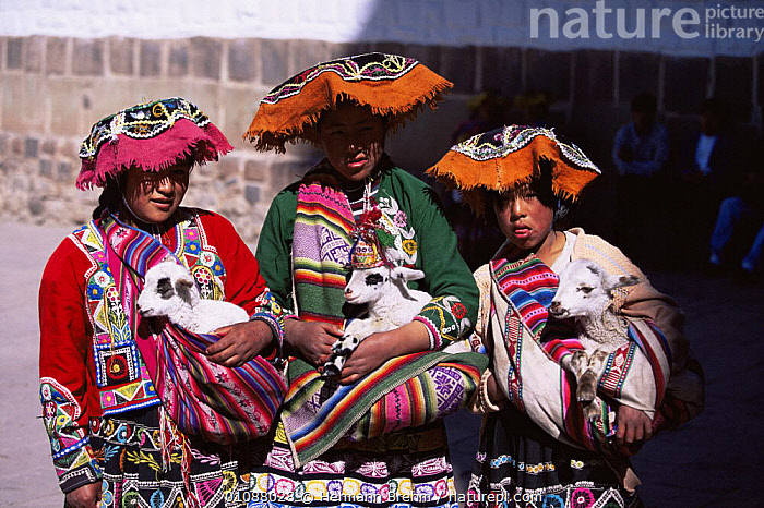 Native Inca children in traditional clothing with baby goats, Cusco, Peru, South America, BABIES,CHILDREN,CLOTHING,CULTURES,GOATS,GROUPS,JUVENILE,MAMMALS,PEOPLE,PETS,SOUTH AMERICA,THREE,TRADITIONAL,TRIBES,YOUNG,SOUTH-AMERICA, Hermann Brehm