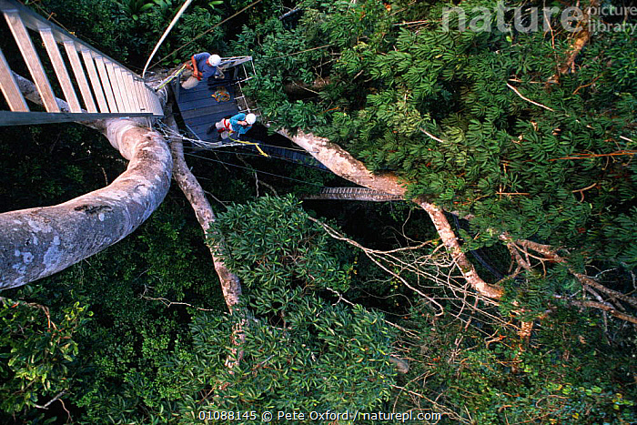 People on canopy walkway, ecotourism in Amazonian Rainforest, Ecuador, CANOPY,ECOTOURISM,PEOPLE,RESEARCH,SKY,SOUTH AMERICA,TOURISM,TREES,TROPICAL RAINFOREST,WILDLIFE WATCHING,Plants, Pete Oxford