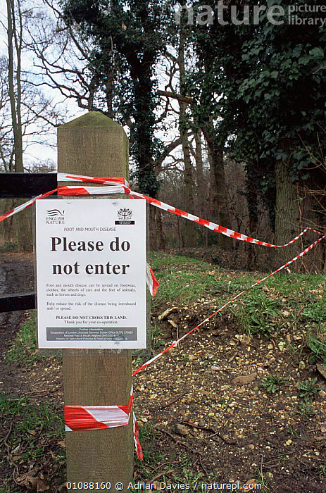Sign prohibits entry to Ashtead common, Surrey, during Foot and Mouth disease outbreak. June 2001, ENGLAND,EUROPE,RESERVE,UK,VERTICAL,WOODLANDS,United Kingdom,British, Adrian Davies