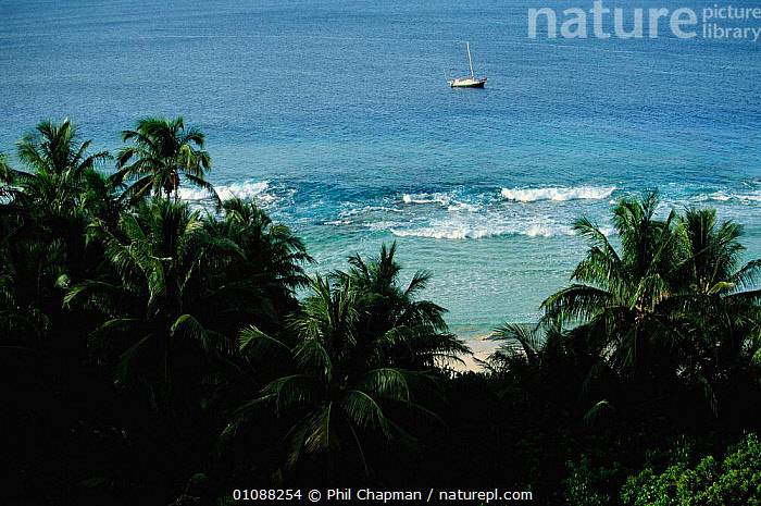 Henderson Island fringing coral reef and boat. The island can only be accessed by dinghy because of the fringing coral. Pacific Ocean, BEACHES,COASTS,CORAL,DINGHY,PACIFIC,PALM,PCH,REEF,SEA,TREES,TROPICAL,PLANTS, Phil Chapman