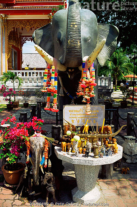 Elephant shrine Wat Chalong buddhist temple Phuket, Thailand, ANIMAL,ANIMALS IN ART,ASIA,BUDDHISM,BUILDINGS,FLOWERS,PEOPLE,SOUTH EAST ASIA,VERTICAL,SOUTH-EAST-ASIA, Pete Oxford