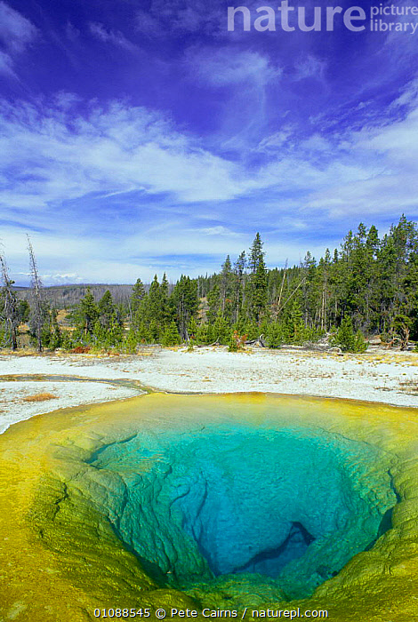 Morning glory pool, Old Faithful geyser, Yellowstone NP, Wyoming, USA, BLUE,GEOLOGY,GEOTHERMAL,GEYSERS,LAKES,MINERALS,NATIONAL PARK,NORTH AMERICA,NP,PCA,RESERVE,VERTICAL,WATER,YELLOWSTONE,USA, Pete Cairns