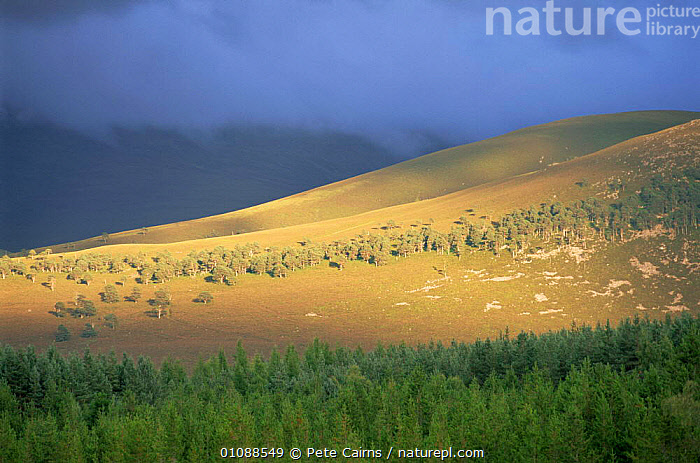 Storm clouds over hillside and coniferous woodland, Strathspey, Scotland, UK, CONIFEROUS,EUROPE,FORESTS,HIGHLANDS,LANDSCAPES,MOORLAND,MOUNTAINS,RAIN,SCOTLAND,STORMS,sunlight,UK,WOODLANDS,United Kingdom,Weather,British, United Kingdom, Pete Cairns