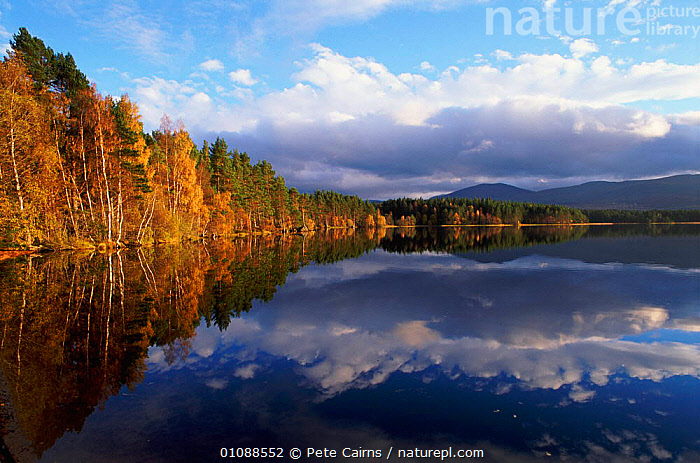 Loch Garten, Strathspey, Scotland, UK, CAIRNS,CLOUDS,EUROPE,HORIZONTAL,LAKES,LANDSCAPE,LANDSCAPES,PCA,REFLECTIONS,SCENIC,SCENICS,TREES,UK,WATER,UNITED KINGDOM,WEATHER,PLANTS,BRITISH,SCOTLAND, United Kingdom, Pete Cairns
