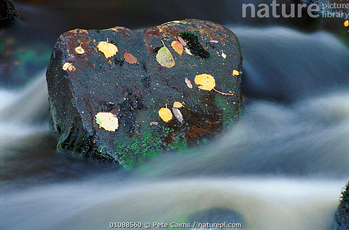 River flowing around rock, Scotland, UK, ACTION,EUROPE,FLOWING,FORCE,HORIZONTAL,LEAVES,MOVEMENT,OUTSTANDING,PCA,POWER,RIVER,RIVERS,ROCK,ROCKS,SCOTLAND,UK,WATER,UNITED KINGDOM,BRITISH, United Kingdom, Pete Cairns