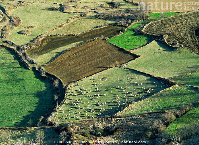Aerial view of Assua valley with agricultural use of farmland, some with livestock, Pyrenees, Lerida, Catalonia, Spain, Europe, EUROPE,FARMLAND,HABITAT,HIGHLANDS,LANDSCAPES,LIVESTOCK,MAMMALS,MOUNTAINS,SPAIN, Juan Manuel Borrero
