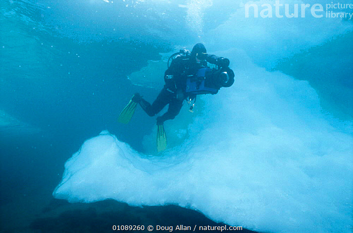 Doug Allan filming under ice, Greenland, ARCTIC,BLUE PLANET,CAMERA,DA,DIVING,DOUG ALLAN,FILM,GREENLAND,HORIZONTAL,ICE,IN,PEOPLE,UNDERWATER,WILD, Doug Allan