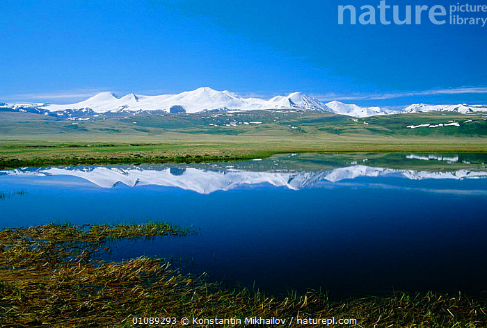 Altai mountains Plateau Ukok - View to China's Five Sacred Peaks from China / Russia border, ALTAI,HORIZONTAL,LAKES,LANDSCAPES,MOUNTAINS,PEAKS,PLATEAU,REFLECTIONS,RUSSIA,SACRED,SNOW,SUMMER,Asia, Konstantin Mikhailov