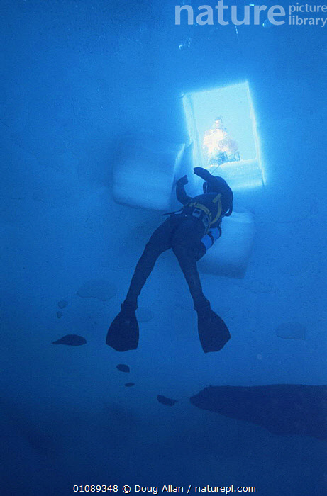 Research diver under hole cut in ice. Signy island, Antarctica. Model released., ANTARCTICA,DIVING,ICE,PEOPLE,POLAR,RESEARCH,UNDERWATER,VERTICAL,Catalogue1, Doug Allan