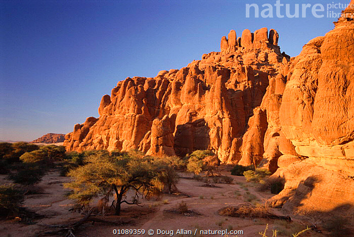 Archei gorge, sandstone cliffs NE Chad, North Africa, AFRICA,CLIFFS,DA,DESERT,DESERTS,HORIZONTAL,LANDSCAPE,NORTH AFRICA,SANDSTONE,SCENIC,TREES,GEOLOGY,PLANTS,NORTH-AFRICA, Doug Allan