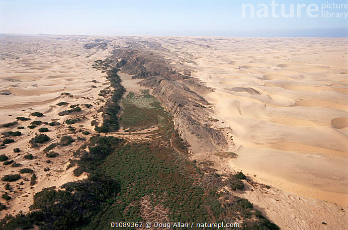 Ephemeral 'sand river' course in dry season, NW Namibia, AFRICA,DESERTS,LANDSCAPES,RIVERS,SAND DUNES,SOUTHERN AFRICA, Doug Allan