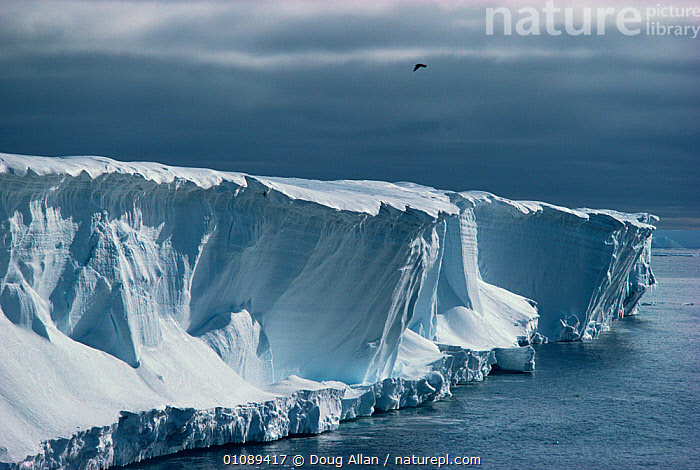 Ice cliffs of the Ross ice shelf, Antarctica  ,  animals in the wild,ANTARCTICA,CATALOGUE2,CLIFFS,DRAMATIC,EROSION,ICE,ice shelf,ICEBERGS,LANDSCAPES,nature,Nobody,OCEAN,Ominous,one animal,outdoors,POLAR,SCALE,sea,SKY,SNOW,Geology  ,  Doug Allan