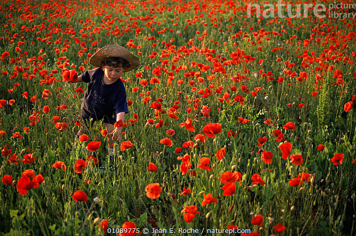 Child in Poppy field, Minervois, Languedoc, France, CHILDREN,EUROPE,FLOWERS,FRANCE,PEOPLE,Poppies,SUMMER,wildflowers, Jean E. Roche