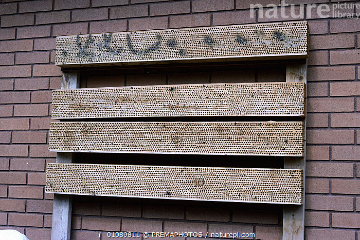Leafcutter bee nests placed near alfalfa crops for pollination {Megachile rotundata} USA, AGRICULTURE,CROPS,FARMLAND,HORIZONTAL,HYMENOPTERA,INSECTS,INTERESTING,JPM,NESTS,POLLINATION,USA,NORTH AMERICA,INVERTEBRATES, PREMAPHOTOS