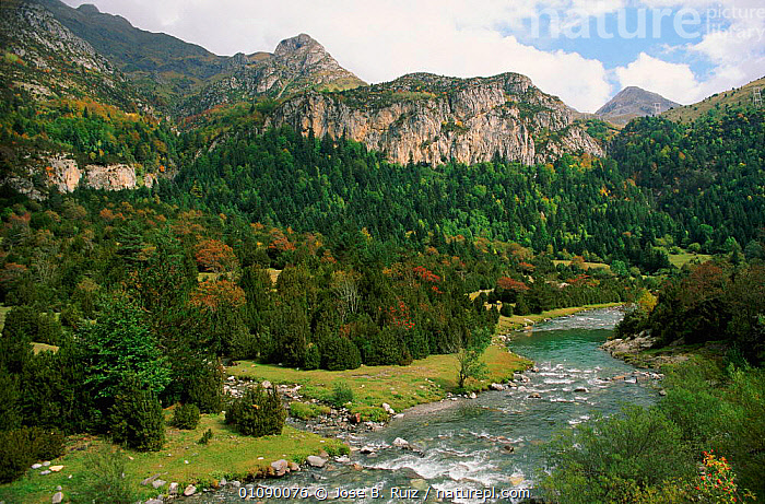 River Ara, Bujareulo, Pyrenees NP, Heusca, Spain, CONIFEROUS,HEUSCA,HILLSIDE,HORIZONTAL,JRU,LANDSCAPES,MOUNTAINS,NATIONAL PARK,NP,PLANTS,PYRENEES,RESERVE,RIVERS,TRAVEL,TREE,TREES,WOODED,Europe, Jose B. Ruiz