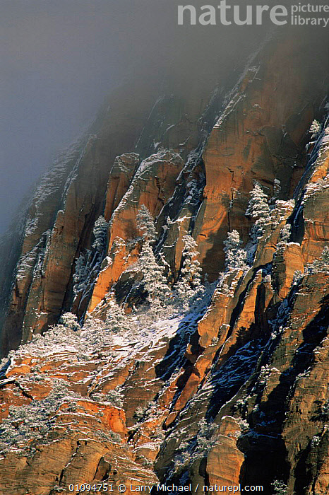 Winter fog descending on snow clad sandstone slopes of Zion National Park, Utah, USA  ,  ATMOSPHERIC,CLIFFS,LANDSCAPES,NORTH AMERICA,NP,ROCK FORMATIONS,ROCKS,SNOW,TREES,USA,VERTICAL,WINTER,Geology,Plants,National Park  ,  Larry Michael