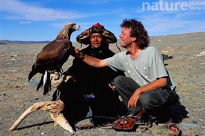 Photographer Pete Oxford with Golden eagle used for hunting by Kazakhs. Tsengel Khairkhan mtn, W Mongolia  ,  ,BIRDS,,HORIZONTAL,HUNTING,HUNTING FOOD,KAZAKHS,KHAIRKHAN,MONGOLIA,PEOPLE,PO,STEPPE,TRADITIONAL,TRIBES ,BIRDS OF PREY,GRASSLAND  ,  Pete Oxford