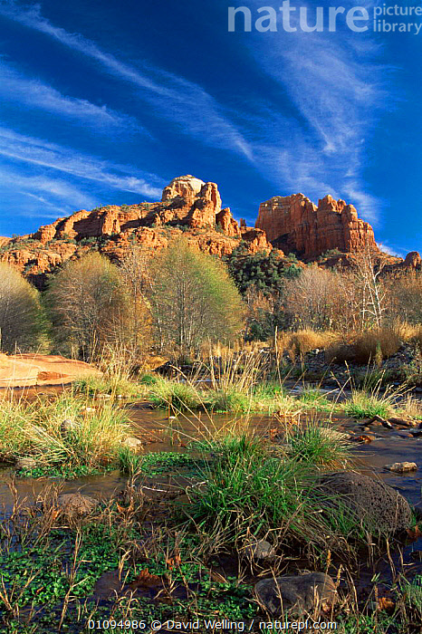 Cathedral Rocks from Oak Creek, Red Rock Crossing, Sedona, Arizona, USA  ,  LANDSCAPES,NORTH AMERICA,RIVERS,ROCK FORMATIONS,ROCKS,sandstone,streams,USA,VERTICAL,WATER,Geology  ,  David Welling