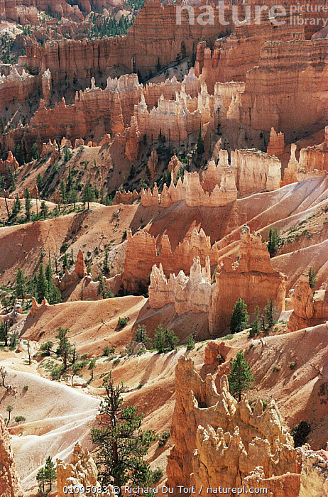 Hoodoo sandstone rock formations, Bryce Canyon NP, Utah, USA  ,  ATTRACTION,CANYONS,LANDSCAPES,NORTH AMERICA,NP,ROCK FORMATIONS,ROCKS,USA,VERTICAL,Geology,National Park  ,  Richard Du Toit
