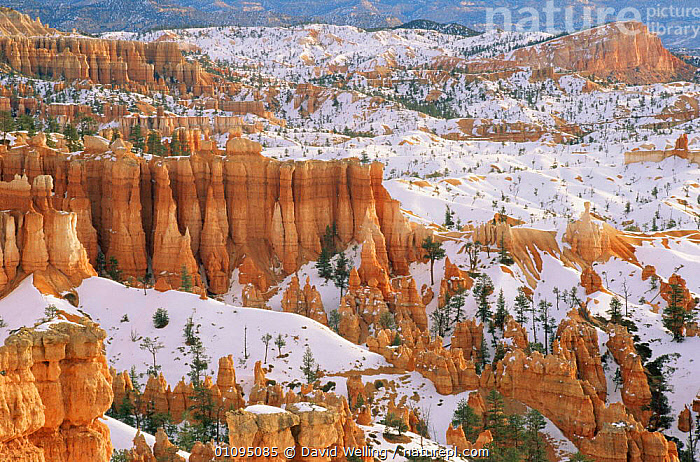 Sinking ship and hoodoos in snow, Bryce Canyon National Park, Utah, USA  ,  HORIZONTAL,LANDSCAPES,NORTH AMERICA,NP,PEACEFUL,ROCK FORMATIONS,ROCKS,SNOW,USA,WINTER,North America,Concepts,National Park,Geology  ,  David Welling