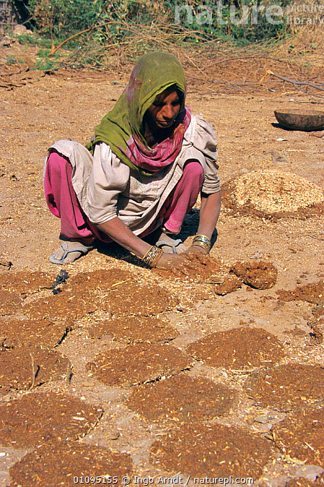 Woman drying cow dung for fuel Jodhpur, Rajasthan, India  ,  TRADITIONAL,ENERGY,INDIAN SUBCONTINENT,PEOPLE,LANDSCAPES,VERTICAL,Asia,INDIAN-SUBCONTINENT,INDIA  ,  Ingo Arndt
