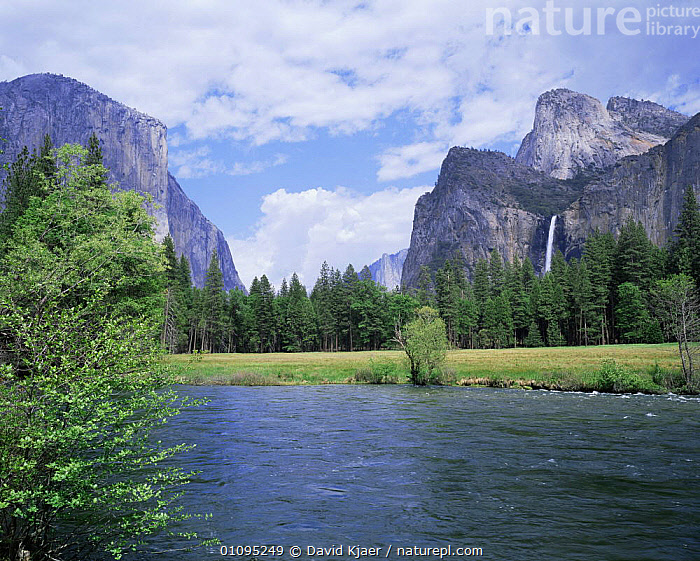 Bridalveil Falls (620 feet) and the Merced River, Yosemite NP, California USA  ,  CLIFFS,CONIFERS,LANDSCAPES,NORTH AMERICA,NP,RESERVE,RIVERS,ROCK FORMATIONS,ROCKFACE,SPRING,SUMMER,TREES,USA,WATER,WATERFALLS,Geology,Plants,National Park  ,  David Kjaer