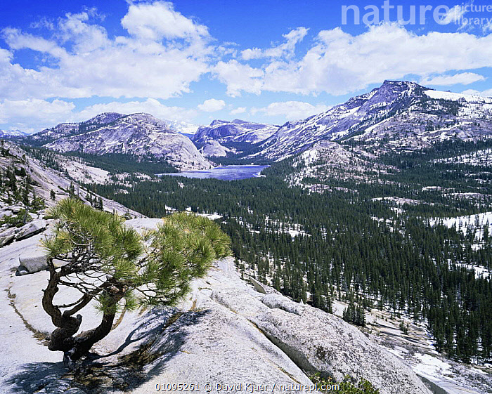 Looking down on Tenaya Lake from Olstead Point on Tioga Pass, Yosemite NP, California, USA  ,  CONIFERS,LAKES,LANDSCAPES,MOUNTAINS,NORTH AMERICA,NP,SNOW,TREES,USA,WINTER,Plants,National Park  ,  David Kjaer