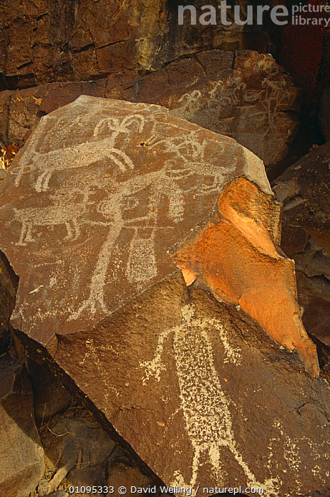 Native American petroglyphs on rocks, Kern County, California, USA  ,  ANIMALS IN ART,ART,CULTURES,NORTH AMERICA,ROCK FORMATIONS,ROCKS,TRIBES,USA,VERTICAL,Geology  ,  David Welling