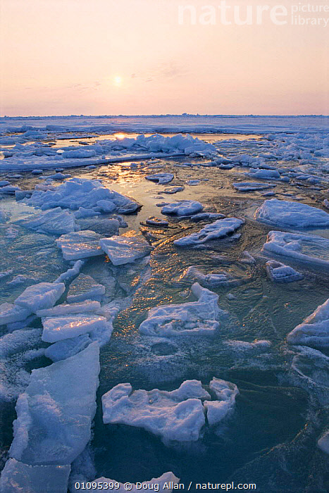 Low spring sun over breaking pack ice, Lancaster Sound, Canadian Arctic  ,  ARCTIC,CANADA,CLIMATE CHANGE,DUSK,GLOBAL WARMING,ICE,LANDSCAPES,MELTING,MELTWATER,NORTH AMERICA,PEACEFUL,POLAR,SPRING,SUN,VERTICAL,WATER,Concepts  ,  Doug Allan