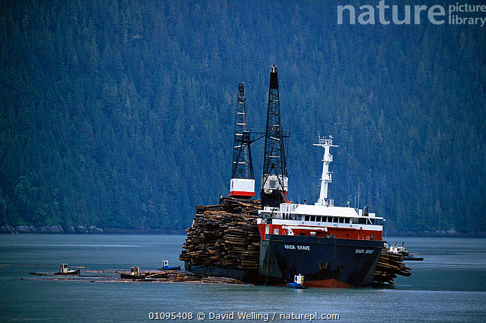 Loading logs on Hadia Brave with tugboats, logging industry, Stewart Harbour, British Columbia, Canada  ,  BOATS,CANADA,COASTAL WATERS,COASTS,DEFORESTATION,DESTRUCTION,INDUSTRY,logging,NORTH AMERICA,TREES,WATER,Plants  ,  David Welling