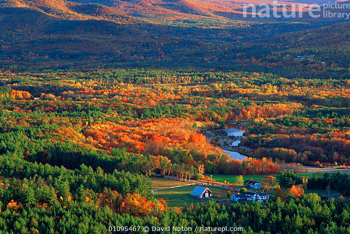 Looking down the Saco Valley in autumn colours, White Mountains, New Hampshire, USA  ,  AUTUMN,BROADLEAF,BUILDINGS,CANOPY,HOMES,LANDSCAPES,MOUNTAINS,NORTH AMERICA,USA,WOODLANDS,ENGLAND  ,  David Noton