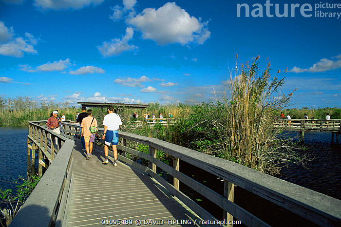 People on boardwalk along Anhinga Trail, Everglades National Park, Florida, USA  ,  BIRDS,birdwatching,GROUPS,LEISURE,NORTH AMERICA,NP,pathway,PEOPLE,RESERVE,TOURISM,tourists,USA,watching,WATER,WETLANDS,National Park  ,  DAVID TIPLING