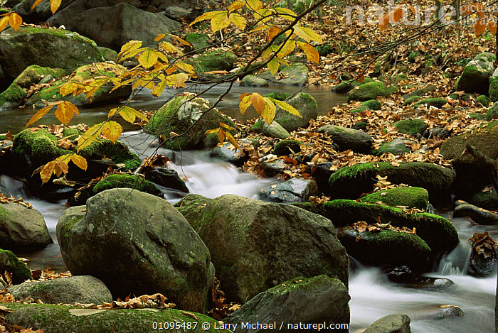 Autumn stream landscape, Smokey Mountains National Park, Tennessee, USA  ,  AUTUMN,LANDSCAPES,LEAVES,NORTH AMERICA,RIVERS,ROCKS,USA,WATER,WOODLANDS  ,  Larry Michael