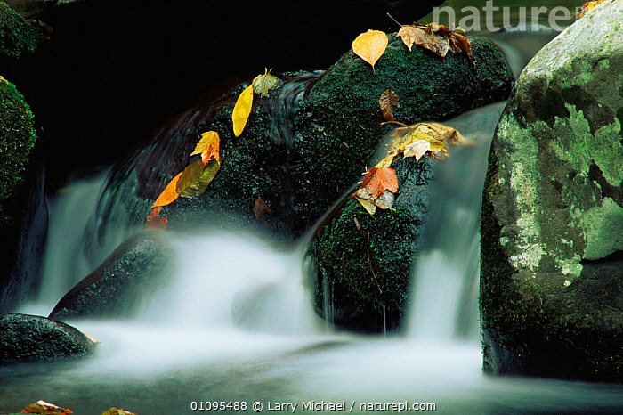 Autumn stream landscape, Smokey Mountains National Park, Tennessee, USA  ,  ABSTRACT,AUTUMN,LEAVES,MOSS,NORTH AMERICA,RIVERS,ROCKS,USA,WATER  ,  Larry Michael
