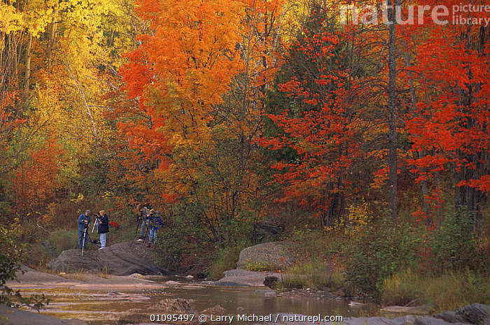 Photographers taking nature pictures of broadleaf woodland in Autumn / Fall, Michigan, USA  ,  AUTUMN,BROADLEAF,COLOURFUL,HORIZONTAL,LANDSCAPES,LEAVES,LEISURE,PEOPLE,RIVERS,TREES,USA,North America,Plants  ,  Larry Michael