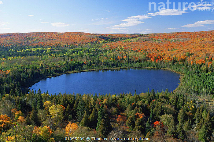 Lake and autumn trees in Britton Park, Superior NF, Minnesota  ,  AUTUMN,BROADLEAF,CONIFERS,LAKES,LANDSCAPES,NORTH AMERICA,NP,RESERVE,USA,WATER,WOODLANDS,National Park  ,  Thomas Lazar