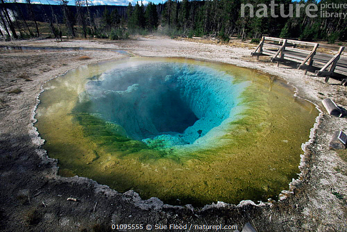 Morning Glory Pool, Yellowstone National Park, Wyoming, USA  ,  COLOURFUL,GEOTHERMAL,HORIZONTAL,LANDSCAPES,MINERALS,NP,RESERVE,ROCKS,USA,WATER,North America,Geology,National Park  ,  Sue Flood