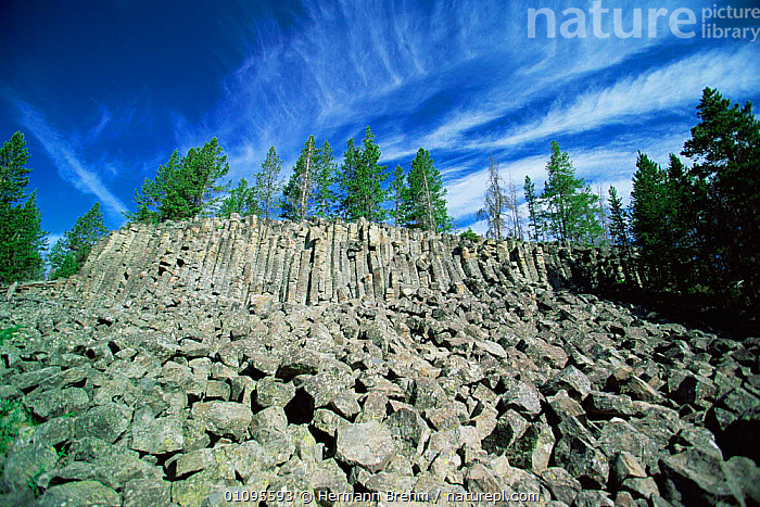 Columnar basalt rock formations, Sheepeater Creek, Yellowstone NP, Wyoming, USA  ,  CONIFERS,GEOLOGY,LANDSCAPES,MINERALS,NORTH AMERICA,NP,RESERVE,ROCK FORMATIONS,ROCKS,TREES,USA,Plants,National Park  ,  Hermann Brehm