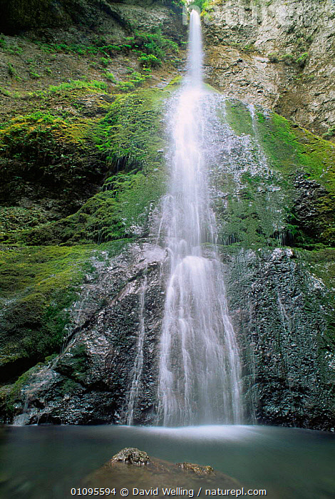 Waterfall at Hoh Rain Forest, Olympic NP, Washington, USA  ,  NORTH AMERICA,NP,RESERVE,RIVERS,ROCKS,TEMPERATE,TEMPERATE RAINFOREST,USA,VERTICAL,WATER,WATERFALLS,National Park  ,  David Welling