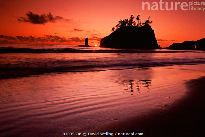 Sea stacks at sunset, Second Beach, Olympic NP, Washington, USA  ,  BEACHES,COASTAL WATERS,COASTS,DUSK,LANDSCAPES,MARINE,NORTH AMERICA,NP,RESERVE,ROCKS,SILHOUETTES,SUNSET,USA,WATER,National Park  ,  David Welling