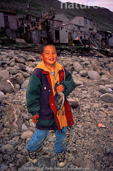 Aleut boy holding Crested auklet shot for food, Little Diomede Aleut Community, Bering Sea, Alaska, USA 1999  ,  ARTIC,BIRDS,CHILD,CHILDREN,COASTS,CULTURES,HUNTING FOOD,LITTLE,NORTH AMERICA,PEOPLE,POLAR,PORTRAITS,SEABIRDS,TRADITIONAL,TRIBAL,TRIBES,USA,VERTICAL  ,  Pete Oxford
