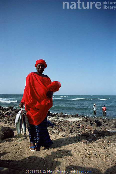 Woman carrying fish, Gambia  ,  AFRICA,CARRYING,COASTS,FISH,LANDSCAPES,PEOPLE,TRADITIONAL,VERTICAL,WEST AFRICA,WOMAN,WEST-AFRICA  ,  Mike Wilkes