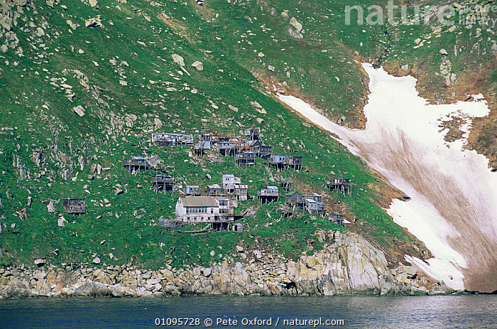 Abandoned Aleut village, King Island, Bering Sea, Alaska, USA  ,  ABANDONED,BUILDINGS,CLIFFS,COASTAL WATERS,COASTS,CULTURES,EMPTY,HOMES,MARINE,NORTH AMERICA,REMOTE,SEA,SETTLEMENT,TRIBES,USA,Geology  ,  Pete Oxford