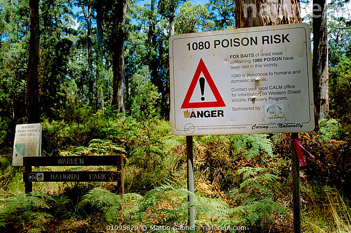 '1080 Poison Risk' sign warning of fox baits. Warren NP, Western Australia  ,  AUSTRALIA,DANGER,FOX,HORIZONTAL,MAMMALS,MGA,NP,PESTS,POISON,POISONOUS,RESERVE,RISK,SIGNS,WOODLANDS,NATIONAL PARK  ,  Martin Gabriel
